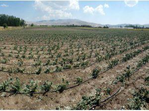 Korkuteli'de tarım arazilerini dolu yağışı vurdu