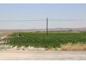 Çukurkuyu'da Tarıma dayalı Hayvancılık bölgesi kuruldu