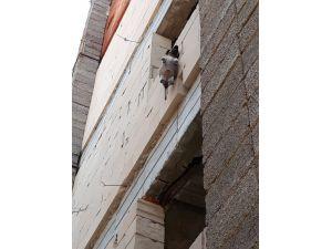 Yavru köpek inşaatın 3. katında asılı bulundu