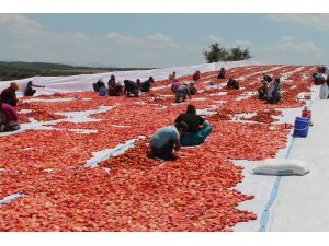 Manisa'nın kurutulmuş domatesleri dünya pazarında