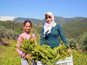 Kıraç topraktan yılda 40 bin lira kazanıyor
