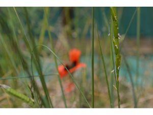Anadolu Bitkilerine Sahip Çıkıyor