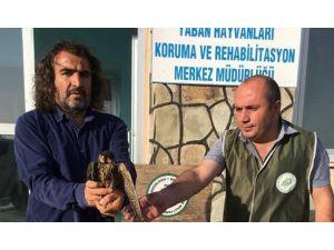 Yaralı Doğan Ve Erguvan Balıkçıl Kuşu Tedavi Altına Alındı