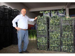"""Samsunlu Komisyoncular: """"Arz Talep Doğrultusunda Fiyatlar Belirlenir"""""""