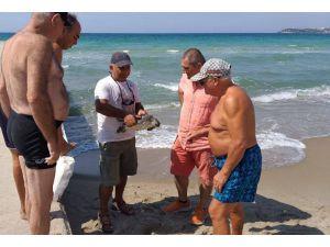 Kuşadası Sahiline İki Deniz Kaplumbağası Vurdu