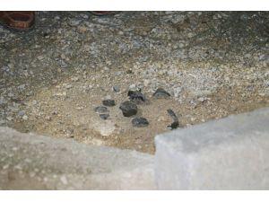 Yol Kenarındaki Pimi Çekilmiş El Bombası Polis Tarafından İmha Edildi