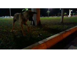 Köpekle Farenin Kavgasında Kazanan Fare Oldu
