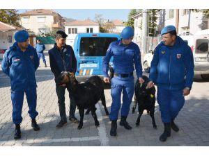 Çalınan Hayvanları Jandarma Buldu