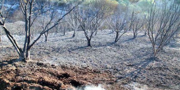 Manavgat'ta Yangının Bilançosu Gün Ağarınca Ortaya Çıktı