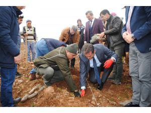 Eğirdir'de 55 Bin Lavanta Toprakla Buluştu