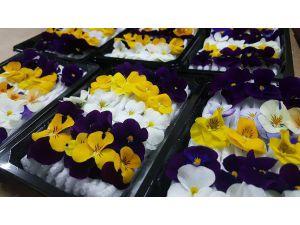 Bu Çiçekler Yenilebiliyor