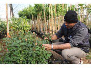 Belediye Fidanlığı Üretiyor, Erdemli Yeşilleniyor