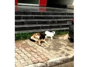 Güneşlenen Kedi İle Köpeğin Dostluğu
