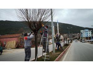 Bucak'ta Bahar Budası