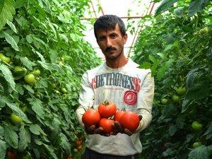 Canan Karatay'ın domates açıklamasına tepki