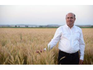 """İncefikir: """"Buğday Ekim Alanı Arttırılmalı"""""""