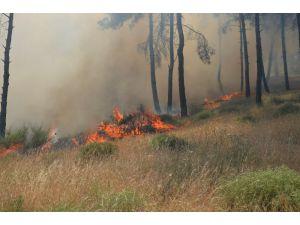 Hatay'da Mesire Alanında Yangın Çıktı