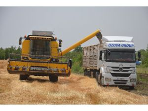 Hatay'da Buğday Hasadı Başladı
