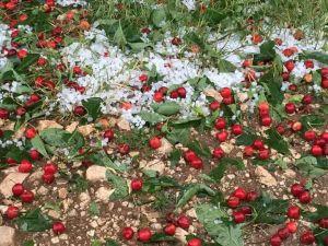Isparta'da Elma, Kiraz Ve Şeftaliyi Dolu Vurdu