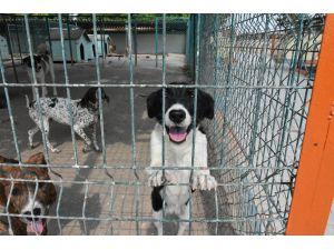 Tarsus'taki Köpek Bakım Ve Islah Evinde Tadilat Yapıldı