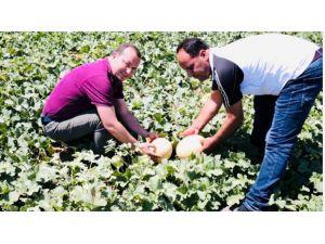 Mut'ta Kavun Üretiminden Bu Yıl 10 Bin Ton Rekolte Beklentisi
