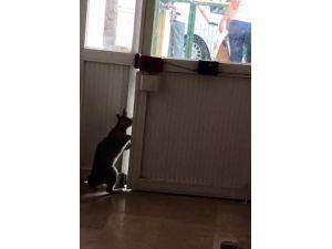 Patisiyle Kapıyı Açan Kedinin Görüntüleri Büyük İlgi Görüyor