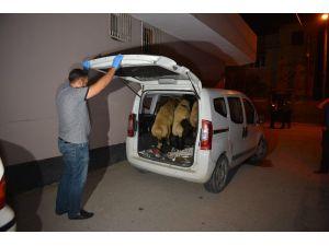 Hırsızlar Polise Yakalanmamak İçin Çaldıkları Koyunları Bırakıp Kaçtı