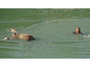 Yardım İçin Irmağa Koştular Gördükleriyle Şok Oldular