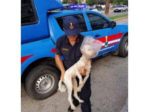 Başına Plastik Bidon Parçası Geçen Köpeği Jandarma Kurtardı