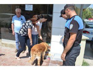 Polis, Sokak Hayvanlarını Unutmadı