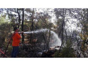 Antalya'da Orman Yangını: 3 Hektarlık Alan Yandı