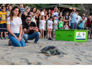 Yaralı Deniz Kaplumbağaları, Kktc'de Tedavi Ediliyor