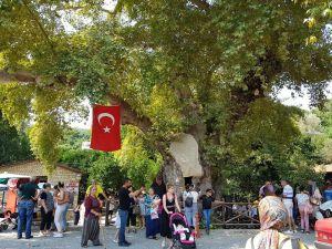 """""""Musa Ağacı"""" Turizmi"""