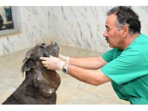 Sokağa Atılan Köpeğe Belediye Sahip Çıktı