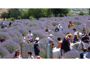 Lavanta Turizmi Bayramda Rekor Kırdı