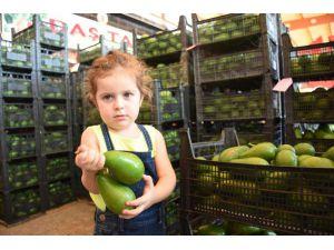 Alanya'dan Ukrayna'ya Avokado İhracatı