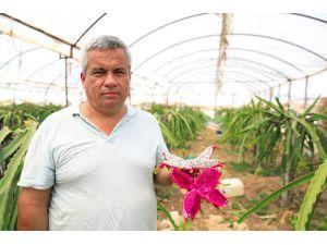 Tropikal Meyve Üreticilerinin Avrupa Hayali