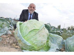 """Elbistan Lahanasına """"Coğrafi İşaret"""" Alınacak"""
