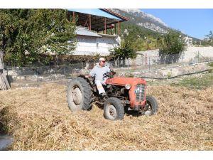 Konyaaltı Belediyesi fasulye hasatı yaptı