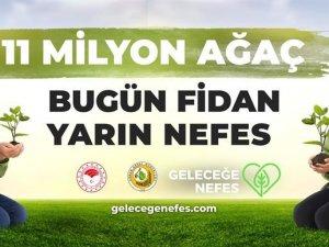 Antalya'da 200 bin fidan toprakla buluşacak