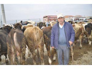 Afyonkarahisar'da Büyükbaş Hayvan Üreticileri Yem Fiyatlarından Dertli