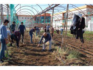 Kumluca'da öğrenciler kışlık sebze ekimi yaptı