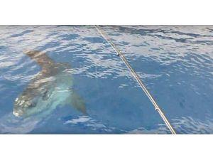 Antalya Körfezi'nde 'ay balığı' şaşkınlığı