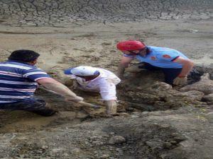 Hayvanlarını kurtarmak isterken kendisi de çamura battı