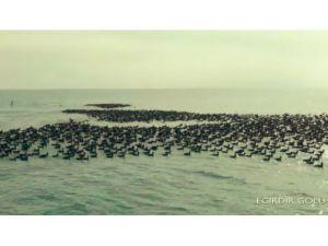 Kış ortası su kuşu sayımları gerçekleştirildi