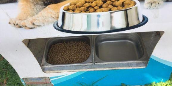 Alanya'da sokak hayvanlarına 80 yeni beslenme ünitesi