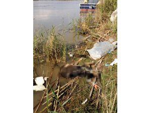 Köpekleri Çuvala Koyup Asi Nehri'ne Atmışlar