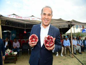 Adana ekolojisine uygun nar çeşitleri geliştirilecek