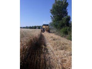 Düziçi'nde Buğday Hasadına Başlandı