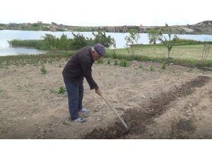 Dondan Etkilenen Sebze Fidelerinin Yerine Yenileri Dikiliyor